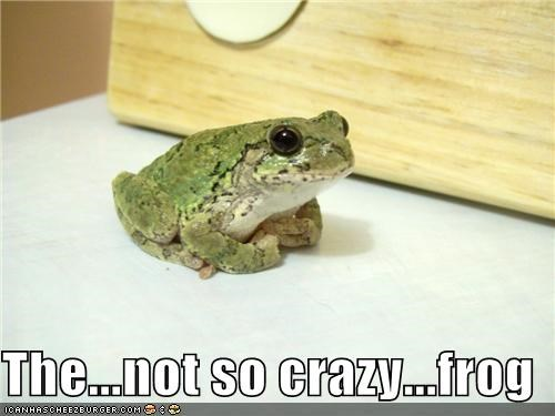 The...not so crazy...frog