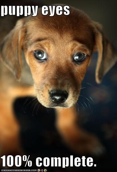 puppy eyes  100% complete.