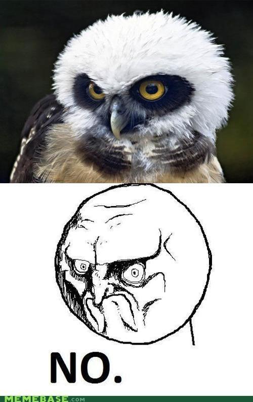 No Owl