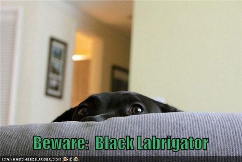 alligator,beware,couch,danger,head,labrador,monster,peeking,warning