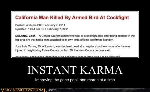 bird,cockfight,gene pool,karma,knife