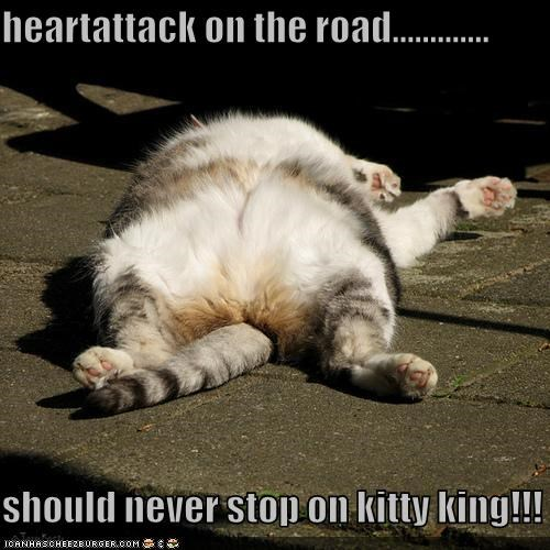 heartattack on the road.............  should never stop on kitty king!!!