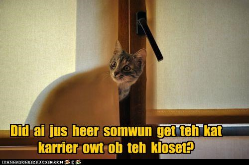 afraid,blinds,caption,captioned,cat,cat carrier,closet,cowering,disappearing,do not want,hearing,hiding,sound,vet,visit