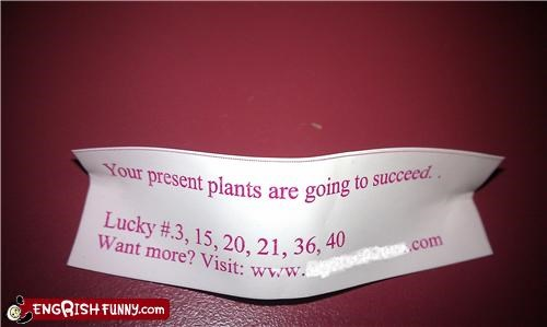 Fortune Cookie Friday - But They're Just Sitting There! ... Growing