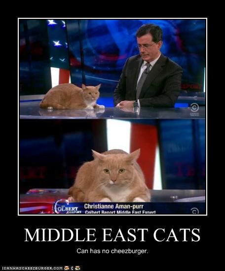 MIDDLE EAST CATS