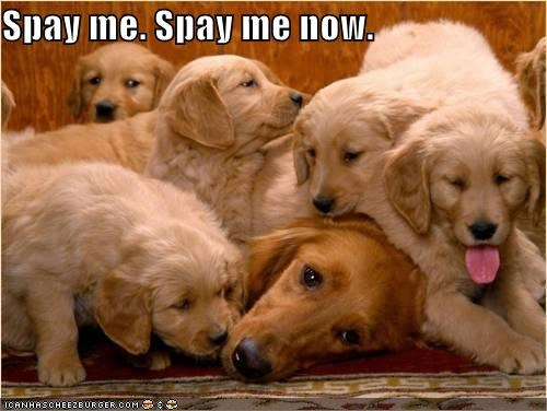 Spay me. Spay me now.