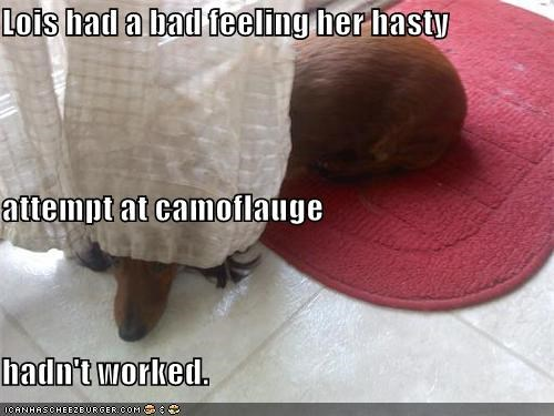 attempt,bad feeling,camouflage,dachshund,FAIL,hasty,hiding,panic,panicked,quick,unsuccessful