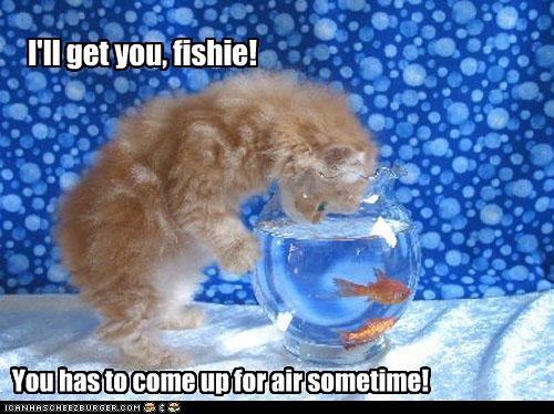 I'll get you, fishie!