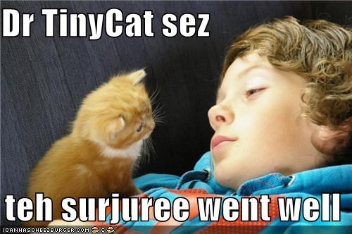 Dr TinyCat sez    teh surjuree went well