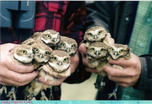 Squee Spree: Owls Vs. Emus