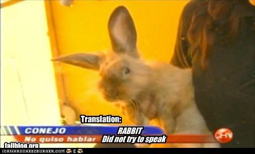 Rabbit didn't speak