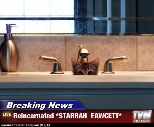 Breaking News - Reincarnated *STARRAH  FAWCETT*