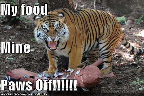 My food  Mine Paws Off!!!!!!