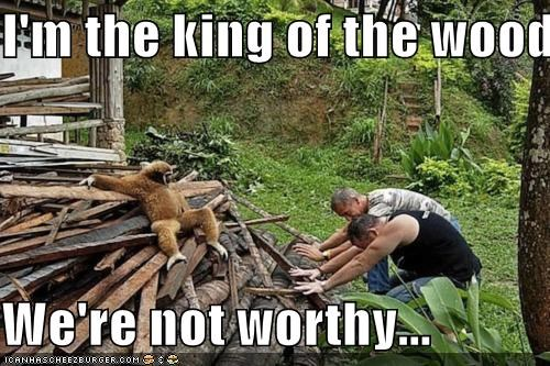 I'm the king of the wood pile  We're not worthy...