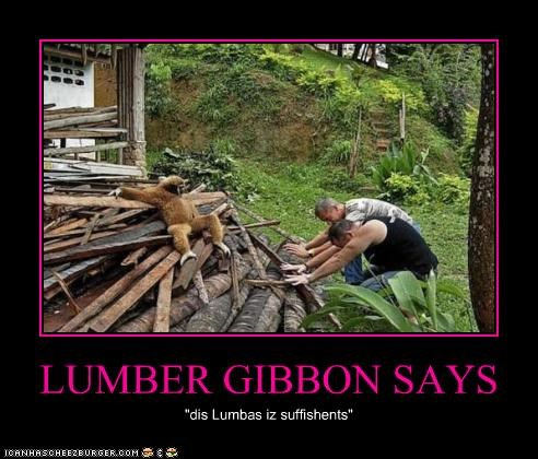 LUMBER GIBBON SAYS