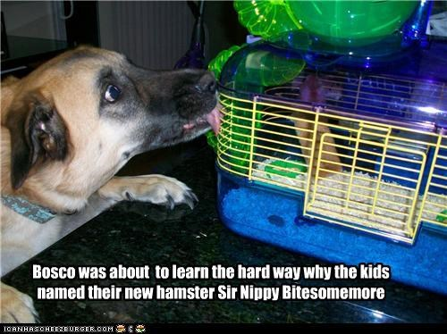 Lifelong Fear of Hamsters in 3.. 2.. 1..