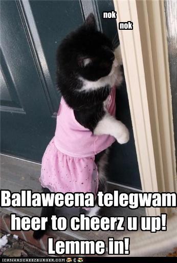 Ballaweena Kitteh