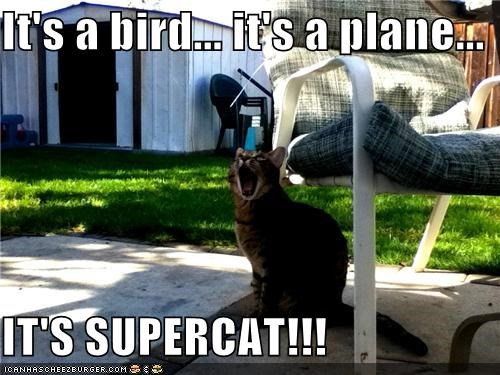 It's a bird... it's a plane...  IT'S SUPERCAT!!!