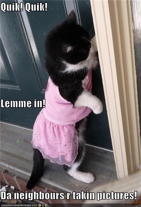 ashamed,caption,captioned,cat,do not want,dress,dressed up,embarrassed,halp,let me in,neighbors,pictures,quick,taking