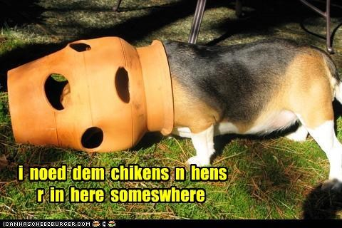 i  noed  dem  chikens  n  hens r  in  here  someswhere