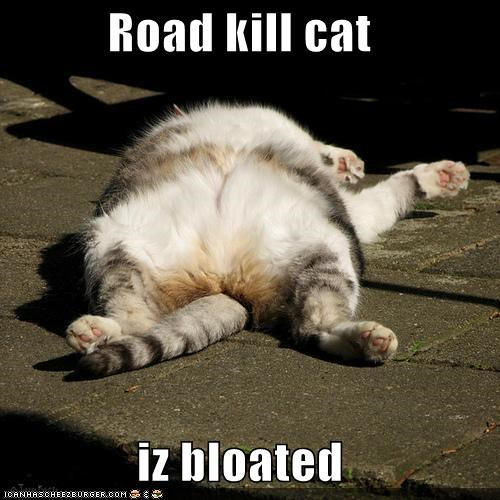 Road kill cat  iz bloated