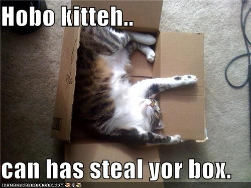 Hobo kitteh..  can has steal yor box.