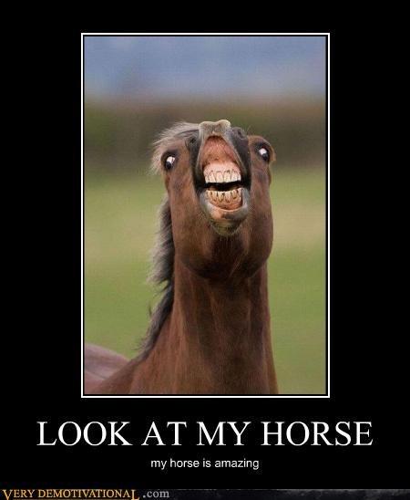 animal,crazy face,horse,meme,song