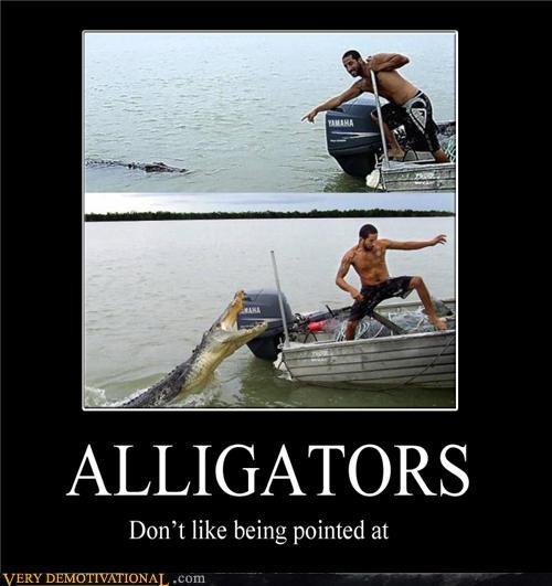 alligator,bad idea,boat,pointing