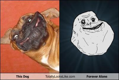 This Dog Totally Looks Like Forever Alone