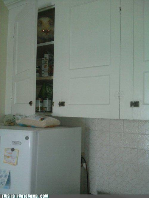 Cats,Caturday,kitchen,ominous,photobomb