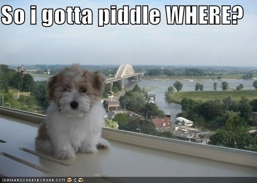 So i gotta piddle WHERE?