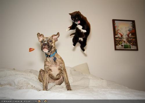 attack,dogs,goggies r owr friends,in motion,Interspecies Love,jump,ninja