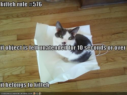 kitteh rule #576 if object is left unatended for 10 seconds or over it belongs to kitteh
