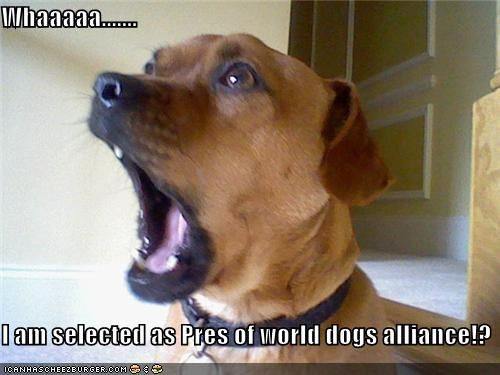 Whaaaaa.......  I am selected as Pres of world dogs alliance!?