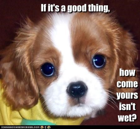 concerned,confused,good,isnt,nose,not,question,suspicious,thing,upset,wet,whatbreed,why,yours