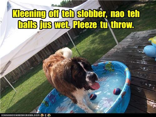 Kleening  off  teh  slobber,  nao  teh  balls  jus  wet.  Pleeze  tu  throw.