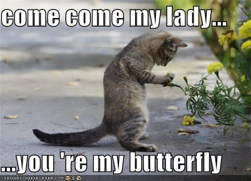 come come my lady...  ...you 're my butterfly