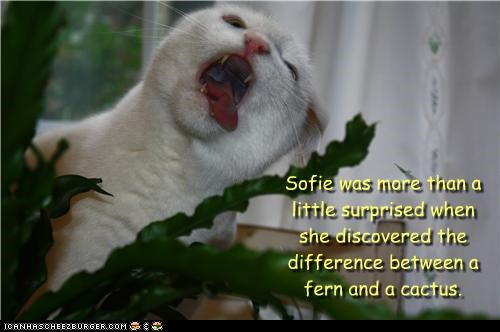 cactus,caption,captioned,cat,difference,different,discovered,discovering,fern,surprised