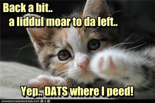 accident,back,bit,caption,captioned,cat,kitten,left,little,little more,more,spot,that,yep