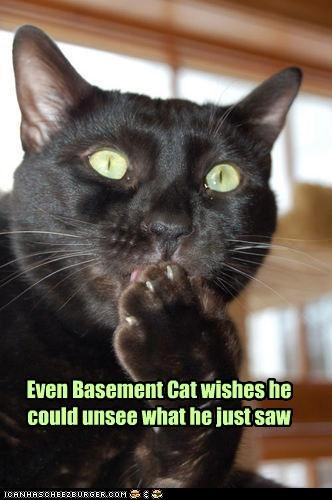 Even Basement Cat wishes he could unsee what he just saw