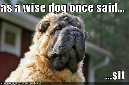 advice,Command,puppy,saying,shar pei,sit,wisdom,wise