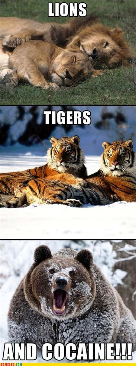 animals,bear,jk,lions,snow,tigers,white powder,wizard of oz