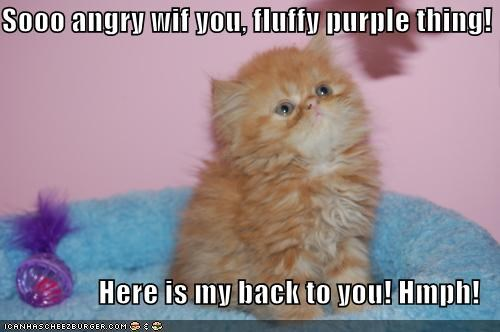 Sooo angry wif you, fluffy purple thing!  Here is my back to you! Hmph!