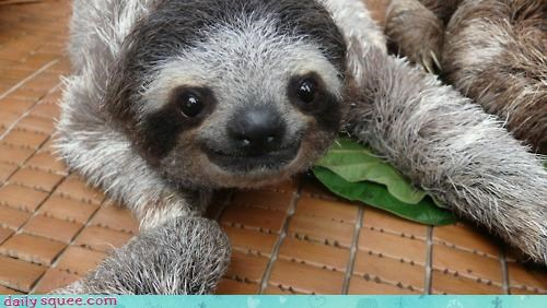 Squee Spree: Sloths Vs. Meerkats