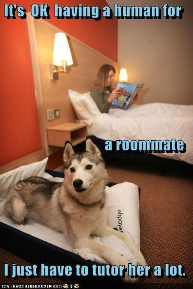content,human,malamute,need,ok,requirement,roommate,tutor