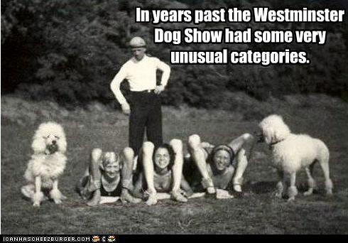 animal,dogs,funny,Photo,women,wtf