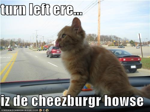 turn left ere...  iz de cheezburgr howse