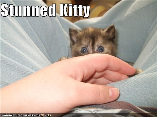 Stunned Kitty