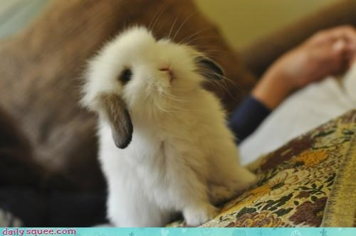 angle,boopable,bunny,fuzzy,lop,lopsided,nose,photograph,pun,rabbit,squee,tilted,tiny