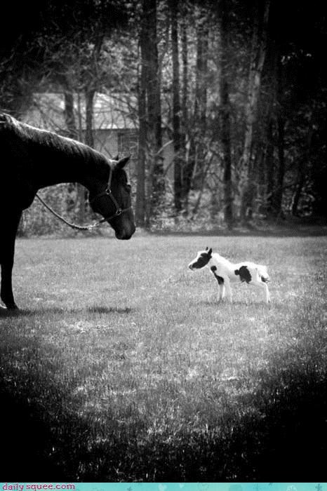 The Itty Bittiest Horse Ever Born
